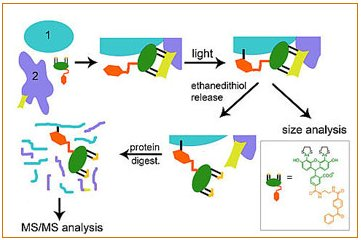 TraPping Protein