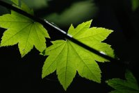 Leaf Butners photo