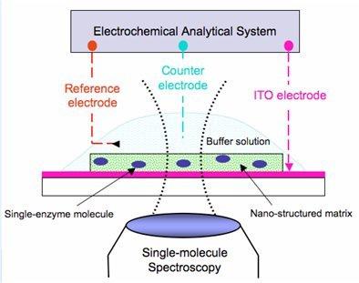 Cyclic voltammetry coupled single-molecule spectroscopy