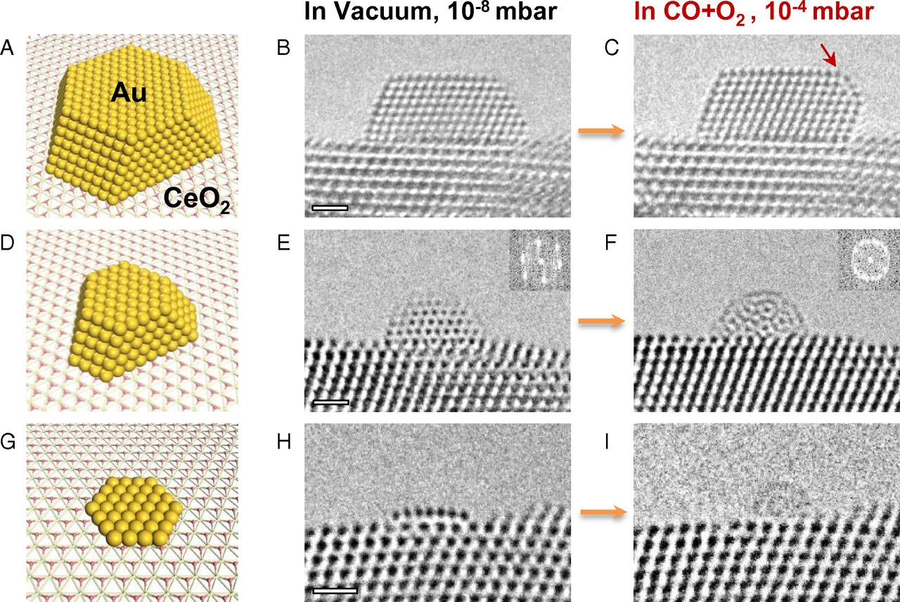 Dynamic structural changes of various gold nanostructures supported on CeO2 upon exposure to the reactant gases