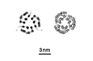 XFEL images of bacteriorhodopsin proteins