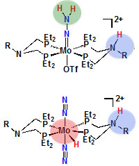 Proton binding locations