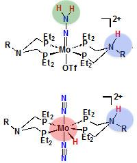 Proton binding locations