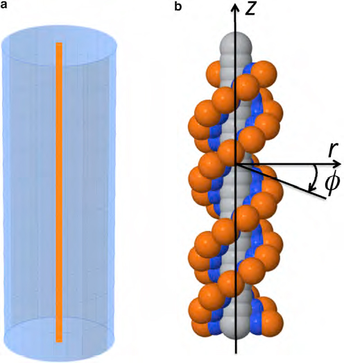 two DNA simulations