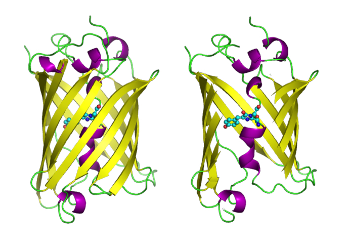depiction of green fluorescent protein molecules