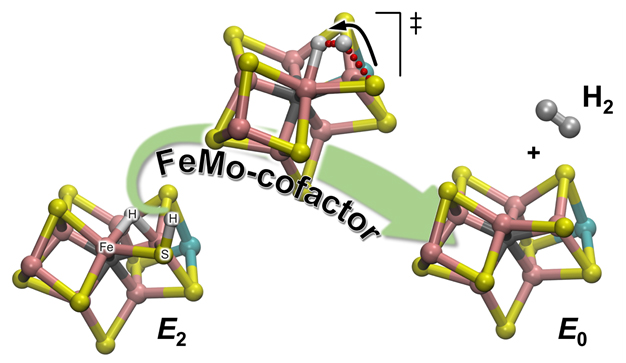 Hydrogen formation via nitrogenase enzyme