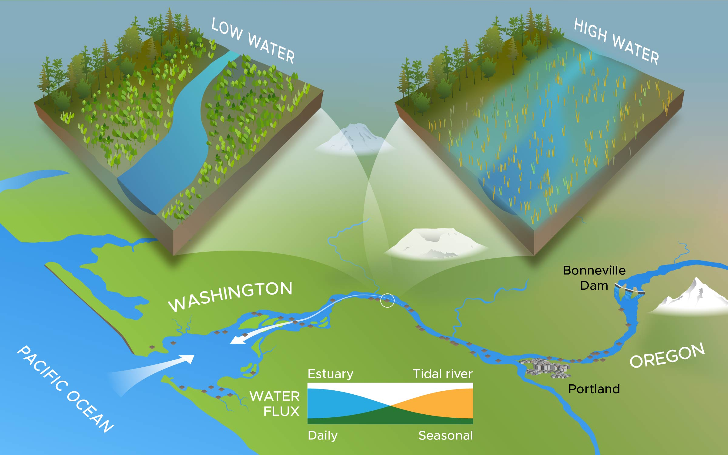 Illustration of Columbia River floodplain study area to examine how hydrology cycles affect estuary and tidal ecosystems.