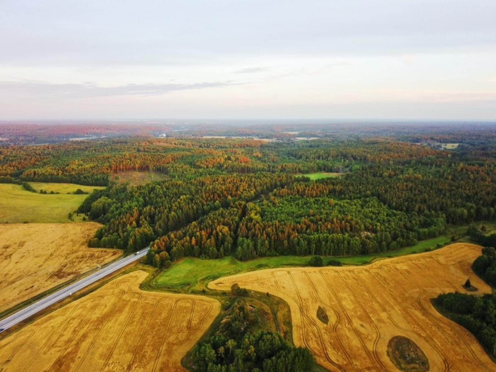 aerial view of a forest and crop land nearby