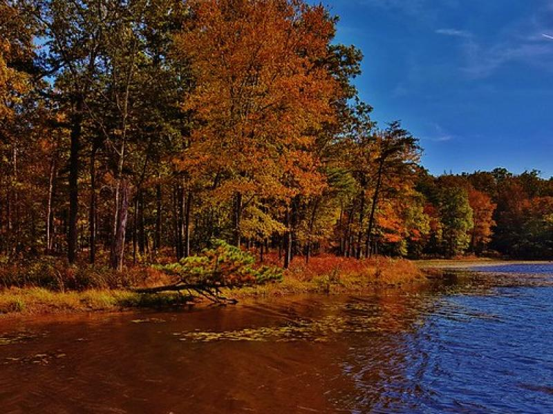lakeside forest in the fall with red and orange trees