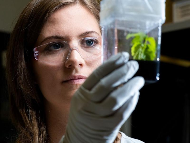 Jayne Aufrecht looks at a plant growing in the plant lab.