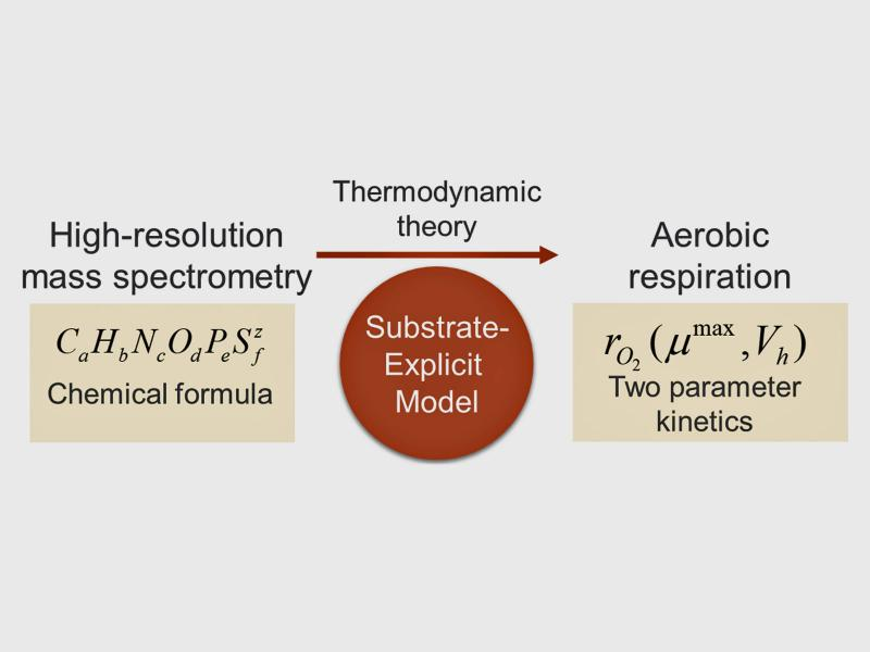 schematic showing how chemical formulas and thermodynamic theory can be used to model aerobic respiration