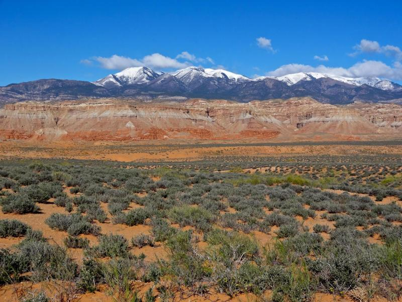 Photo of drylands ecosystem in Utah. Low-lying scrub brush with mountains in the background.