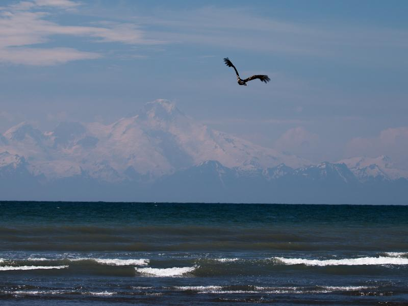 Cook Inlet waves