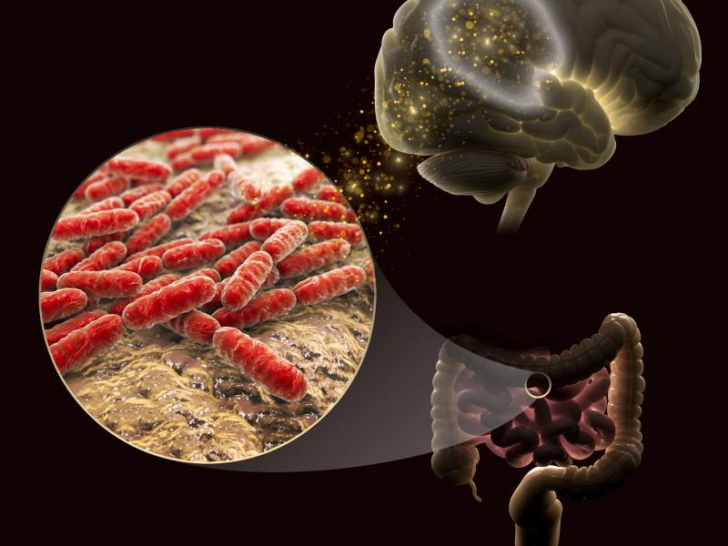 The gut microbiome's brain connection.