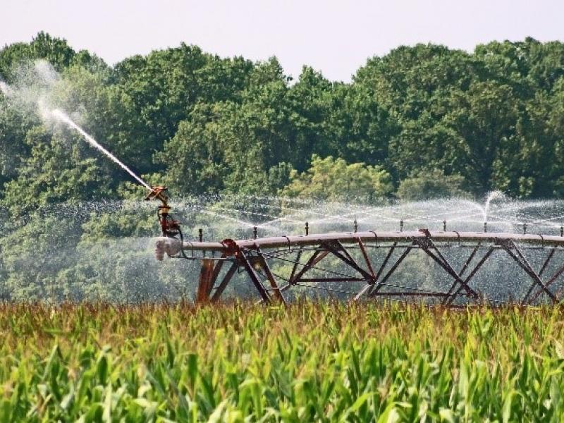 Large commercial sprinkler system above growing corn in a field
