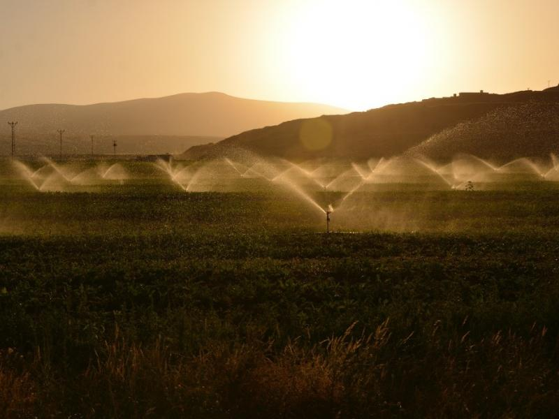 sprinklers watering a farm field