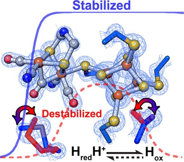 Within [FeFe]-hydrogenases, secondary interactions directly influenced the relative stabilization/destabilization of different oxidation states of the active site metal cluster.