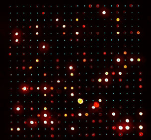 Microarray Image